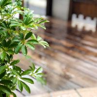 雨の日の植物とウッドデッキ 1
