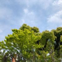 植物の緑と空 5