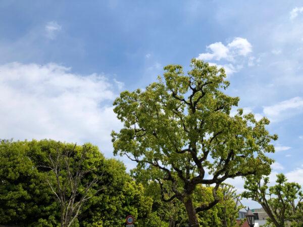 植物の緑と空 4