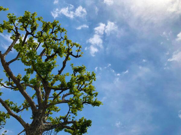 植物の緑と空 3