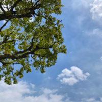 植物の緑と空 2