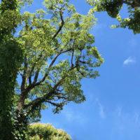 植物の緑と空 6