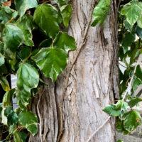 樹皮・木の皮 2