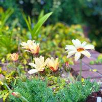 レンガから生えている花 1