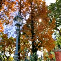 紅葉と街灯 2