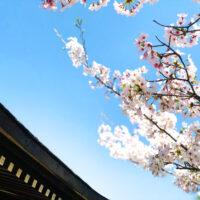 桜の枝と青空 1
