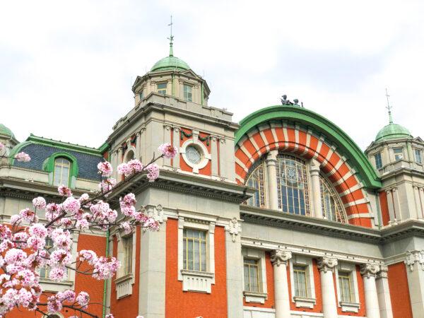 大阪市中央公会堂と桜